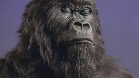 Cadbury Gorilla Advert