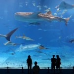 Why The Kuroshio Sea Aquarium Video Goes Viral?