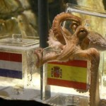 World Cup 2010: The Psychic Octopus
