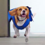 Have You Seen KLM's Cute Lost And Found Service?