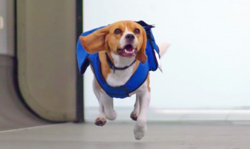 KLM-lost-and-found-dog-service-beagle-dog-social-media